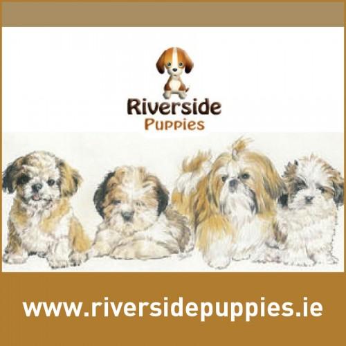 Riverside Puppies - Kilanerin