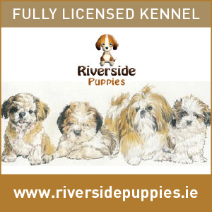 Fully Licensed Puppy Kennel & Breeder - Kilanerin Wexford